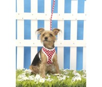 Dotty Softy Harness & Lead